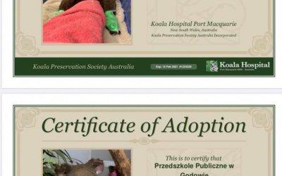 Adopcja australijskich koali
